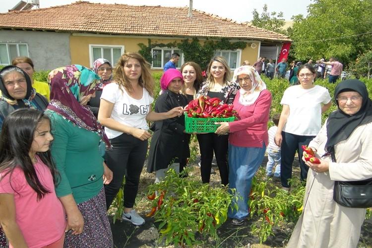 Kadın Çiftçilerin Yetiştirdiği Kapya Biberlerin Tarla Günü Yapıldı