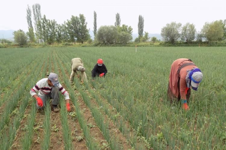 Mevsimlik Tarım İşçilerinin Yıllık Kazanç Miktarı Açıklandı