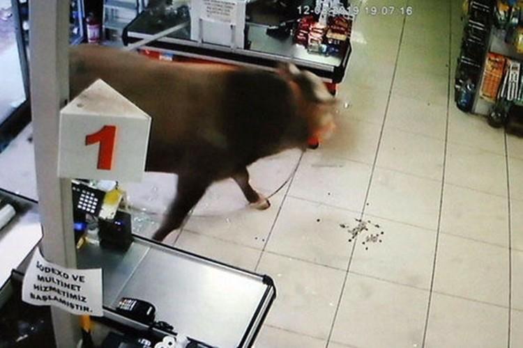 Kurbanlık boğa marketi birbirine kattı! Panik anları kamerada!