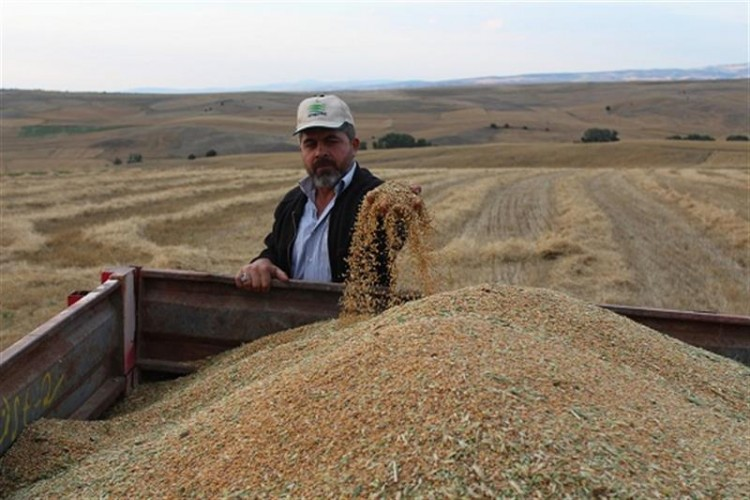 Toprak İşlemesiz Tarımda 5. Yıl Hasadı