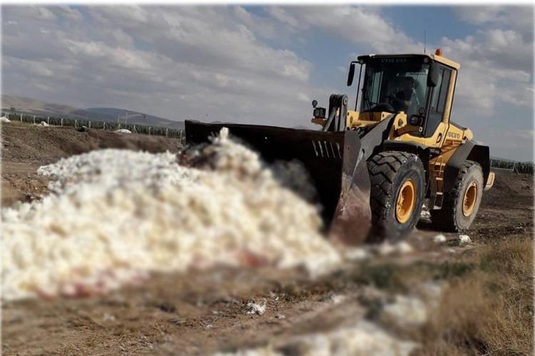 Yumurtada Irak Krizi Sürüyor! 17 Milyon Tavuk Kesildi, 1 Milyonu Telef Edildi