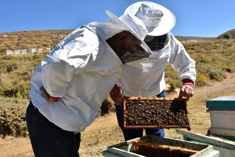 Kraliçe arı üretip, yılda 5 bin adet yurt geneline gönderiyor