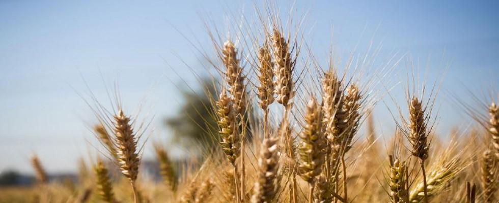 Ziraat Odası uyardı: Gıda fiyatları Yükselecek