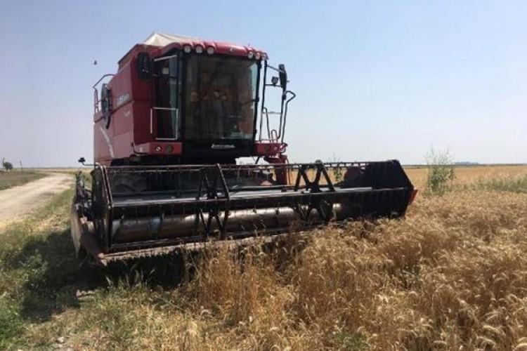 Adana'da buğday hasadı başladı