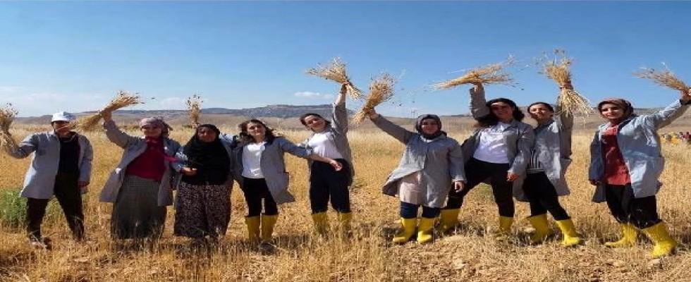 Mezopotomya'nın en eski buğdayında üç yılda 400 ton üretim