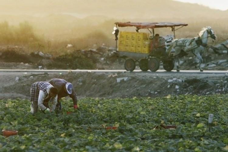 İsrail, Gazze Sınırındaki Arazilere Kimyasal İçerikli İlaçlama Yapıyor