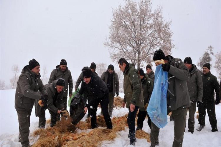 Yoğun Kış Şartlarının Yaşandığı Ankara'da Yaban Hayvanları Unutulmadı…