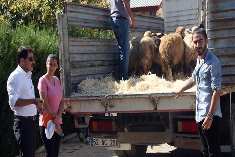 30 Genç Çiftçiye 1020 Koyun Dağıtıldı