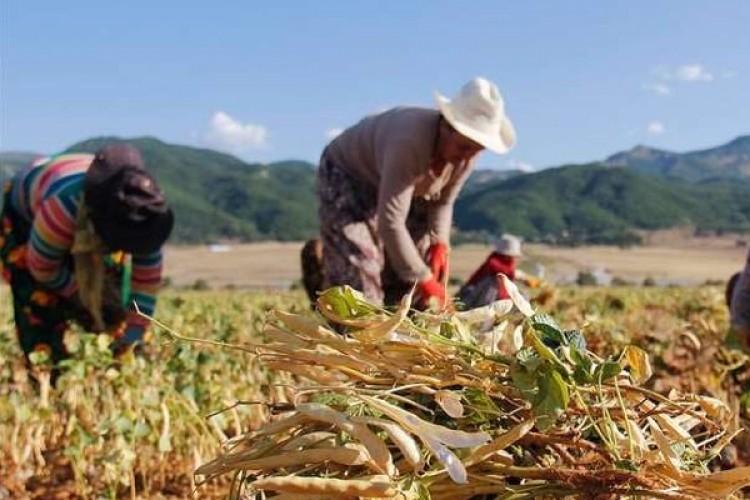 Tarım Bakanlığından Kırsaldaki Kadınlara Destek