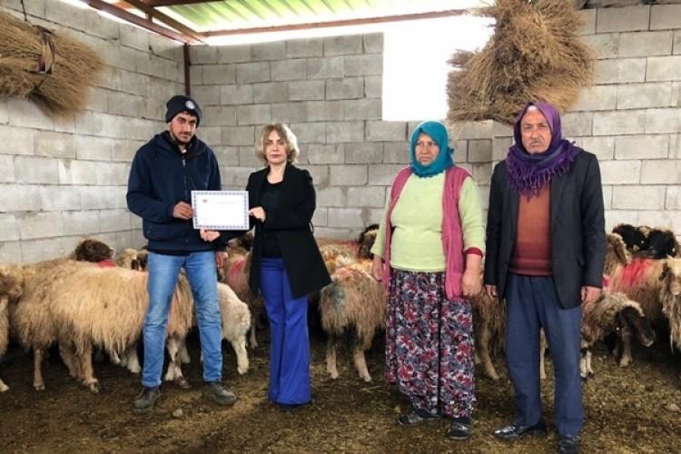 40 Genç Çiftçiye 1360 Adet Koyun Dağıtıldı