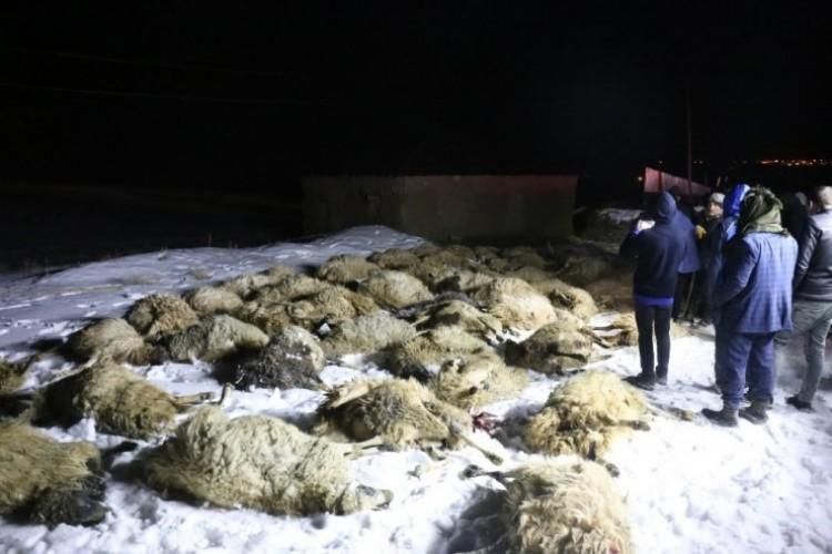 Ahır çöktü 75 koyun telef oldu