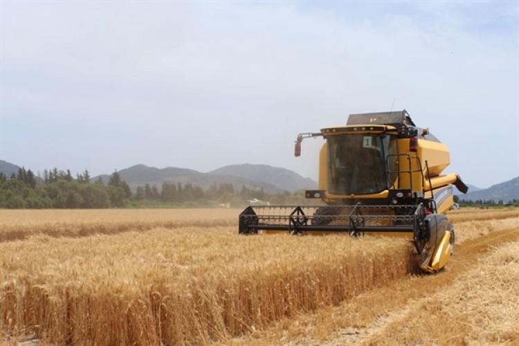 Tarım ÜFE Temmuzda Yüzde 1,06 Azaldı