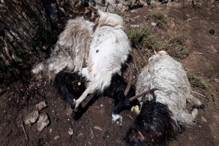 Hakkari'de yıldırım düştü 13 hayvan telef oldu