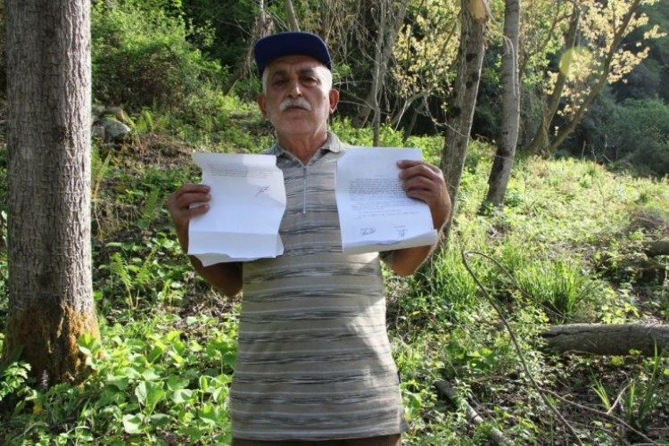 Tapulu Arazisine 40 Yıl Önce Diktiği Kavak Ağaçlarına, Orman Arazisi Diye El Konuldu