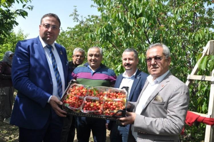 Tarsus'ta Açık Alanda Kiraz Hasadı Yapıldı
