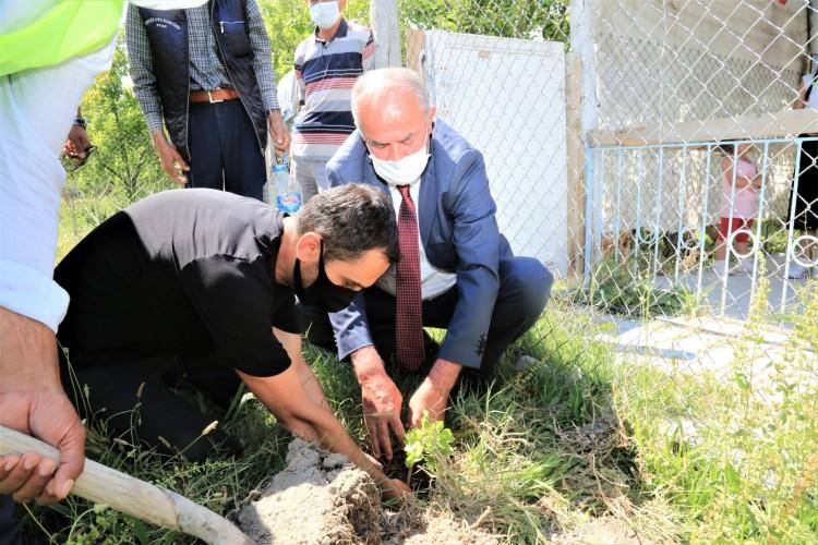 Tuşba Belediyesi çiftçilere Erciş üzümü fidanı dağıttı