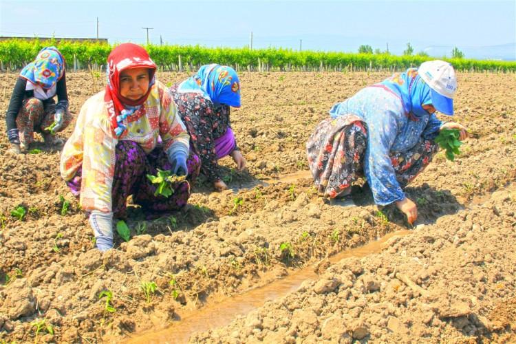 Tarım Şubat Ayında 5 Milyona Yakın İstihdam Sağladı