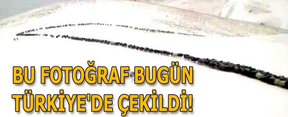 Bu fotoğraf bugün Türkiye'de çekildi!