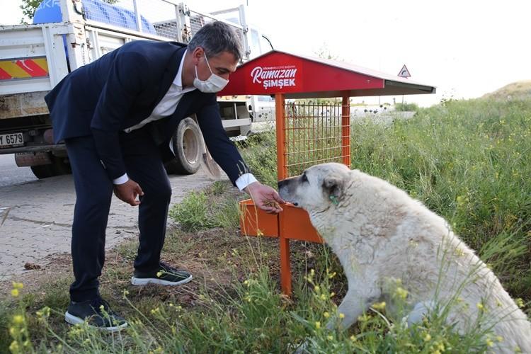 Gölbaşı Belediyesi Sokak Hayvanları için İki Projeyi Hayata Geçiriyor