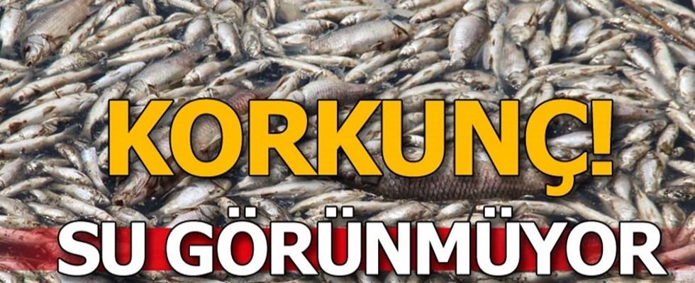 Büyük Menderes Deltası'nda toplu balık ölümleri tedirgin etti