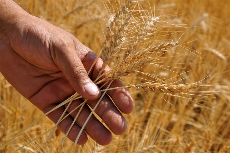 Ambarlar Artık İthal Buğday İle Doluyor