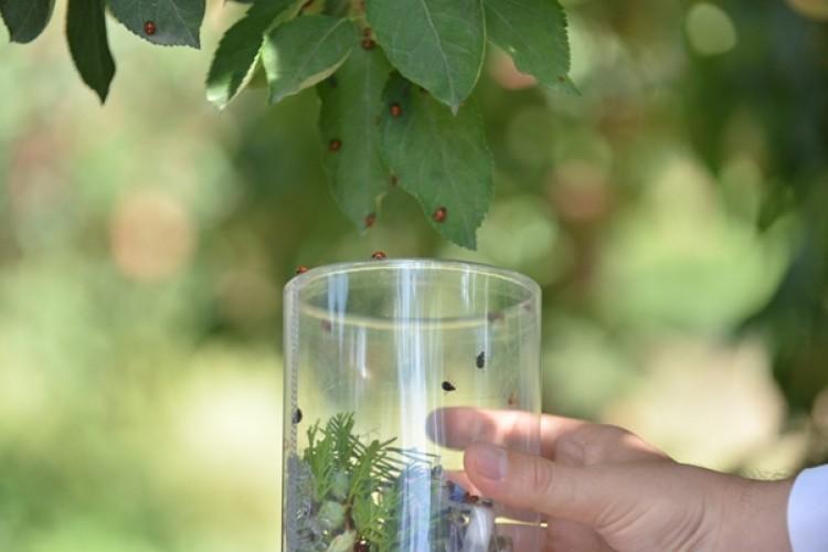 Bitkisel Üretimde Biyolojik Mücadele Destekleri Belli Oldu