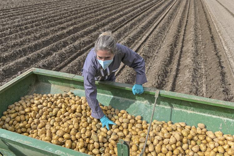 Tomra Food, patates üreticileri için yeni e-kitap yayınladı
