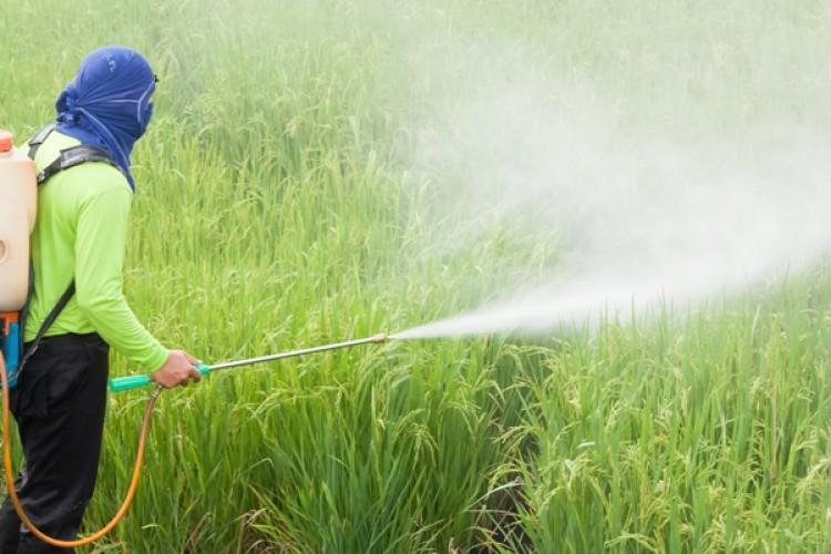 Halk Sağlığı İçin Pestisit Bağımlılığından Kurtulmalıyız