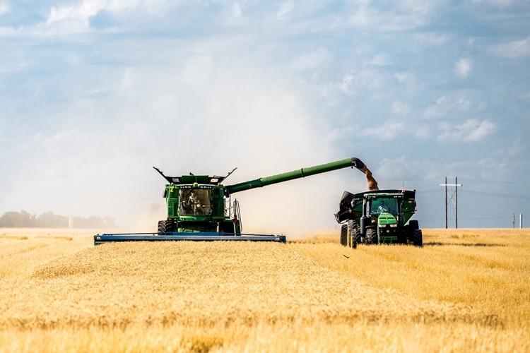 FAO: Buğday Üretimi 2019'da Sıçramaya Hazır