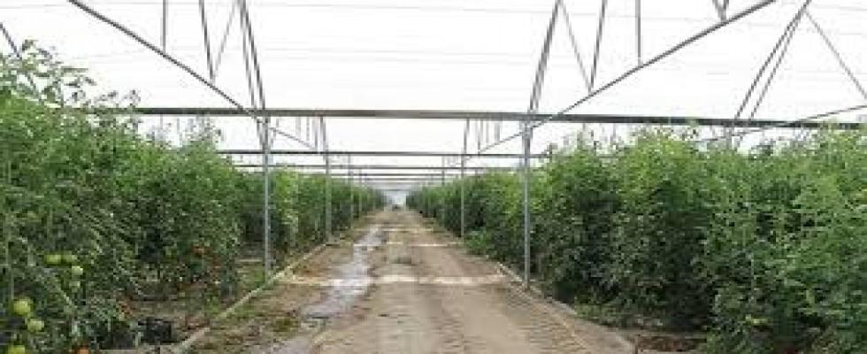 Tarıma Dayalı Yatırım Projeleri İçin Süre Uzatımı