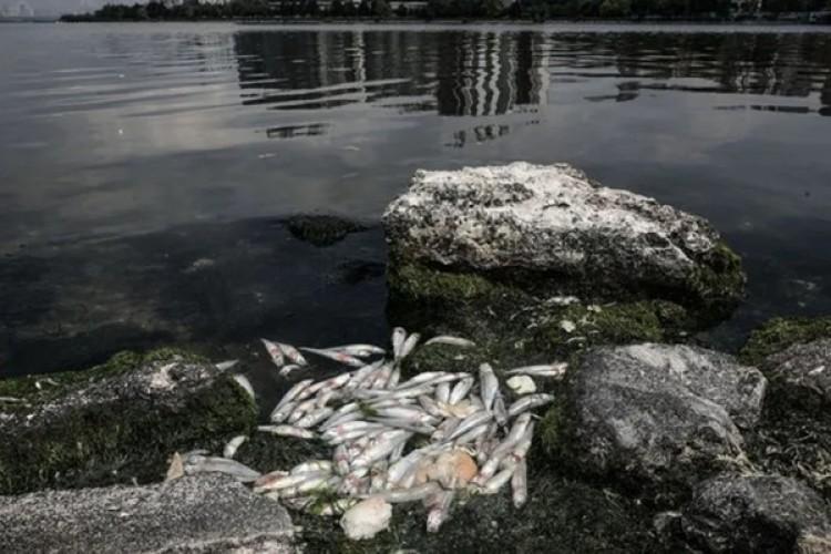 Tarım ve Orman Bakanlığı'ndan Küçükçekmece Gölü'ndeki balık ölümleri açıklaması