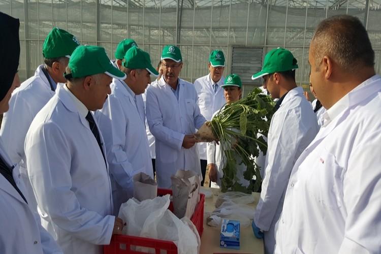Kayseri Şeker Ar-Ge Merkezi, Pancar Tohum Islah Çalişmasina Hiz Verdi