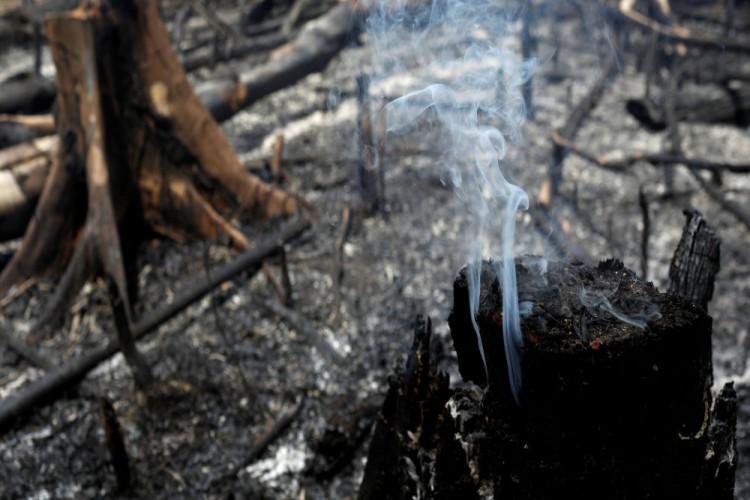 Bolsonaro: Amazon Ormanları'nı Çevreciler Yakıyor