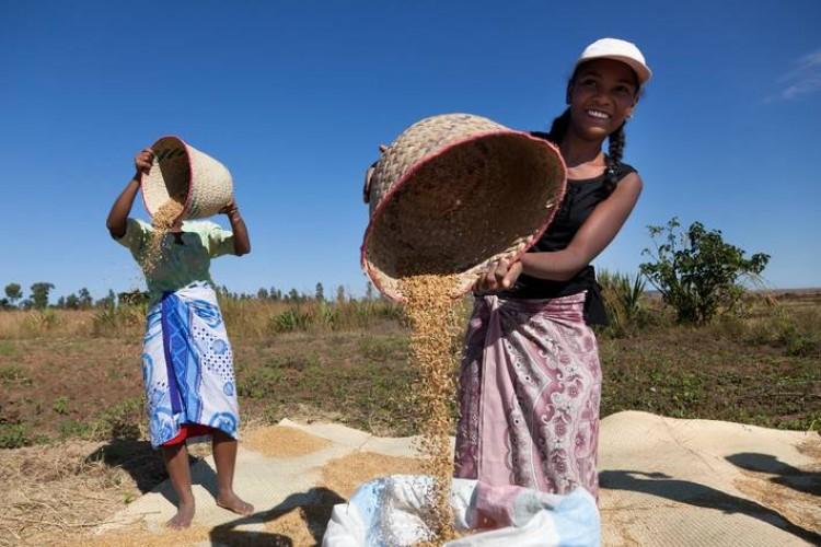 Küresel Gıda Fiyatları Kasım'da Yükseldi