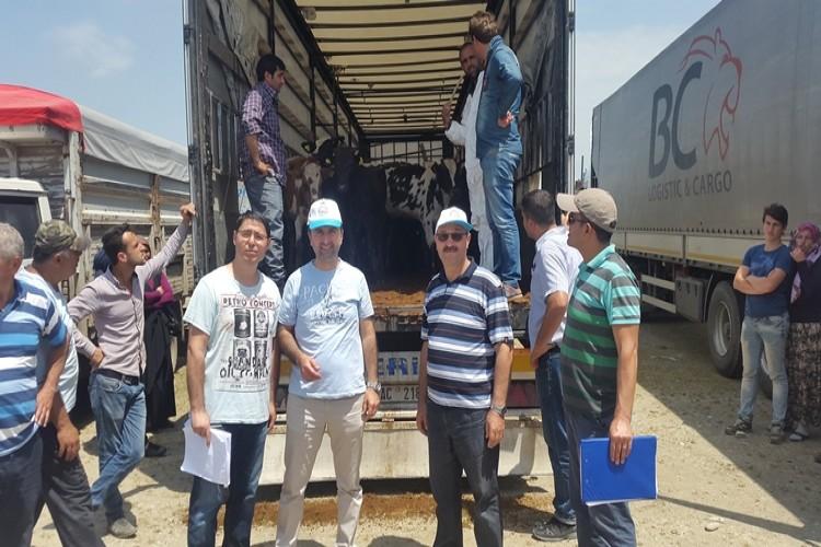 Düzce'de Genç Çiftçilere Hayvanları Teslim Edildi