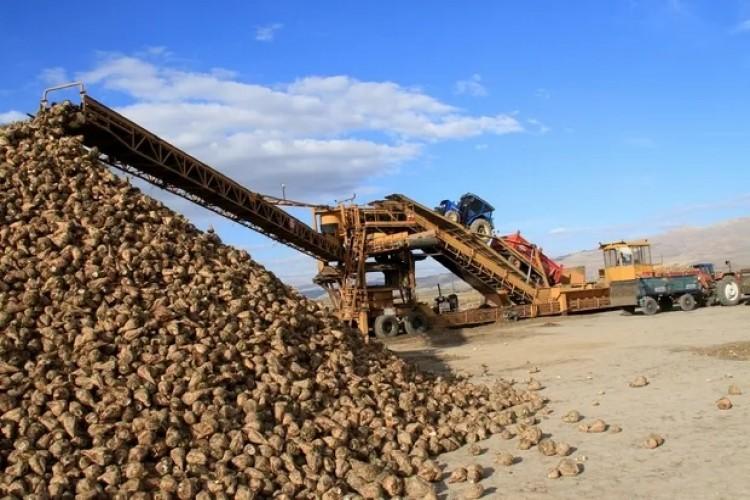 Şeker Pancarı Üreticilerine Avans Ödemeleri Başladı