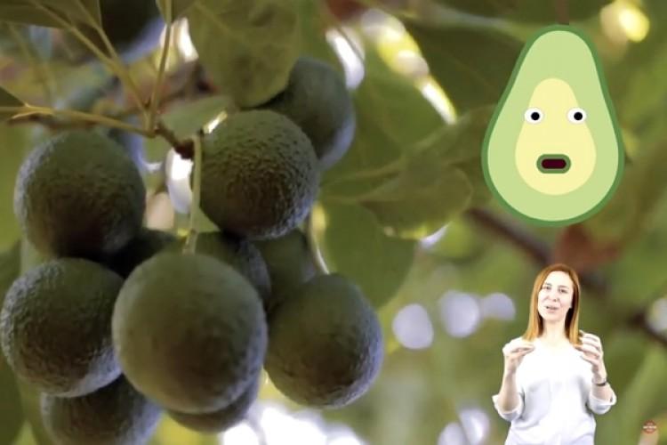 Avokado Filmi İşaret Dilinde