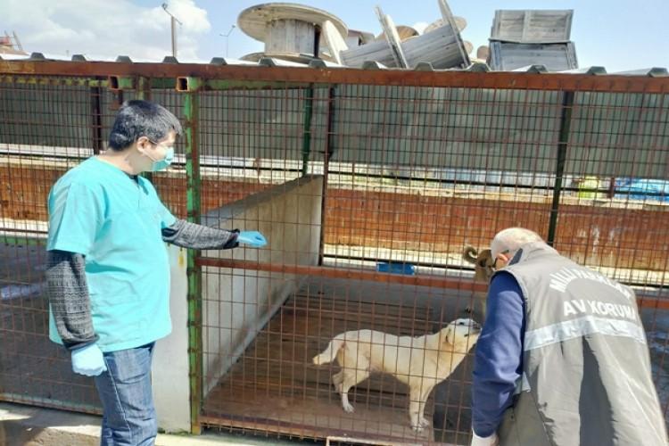 Tarım Ve Orman Bakanlığı Sokak Hayvanları İçin Harekete Geçti