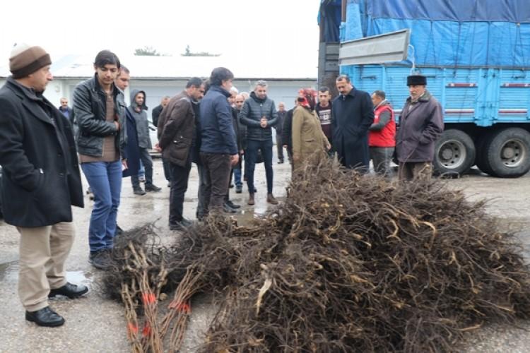 Elazığ'da Üreticilere Yüzde 75 Hibeli Ceviz Fidan Dağıtımı Yapıldı