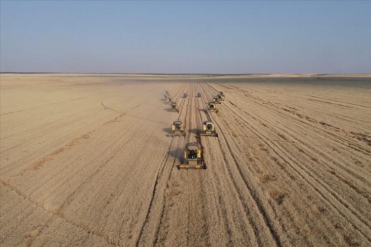 'Dev İşletme'nin Kaliteli Buğdayına Yurt Dışı İlgisi