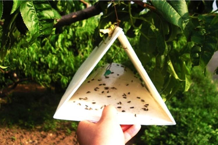 Bitkisel Üretimde Biyolojik ve Biyoteknik Destekleme Müracaatları Başladı