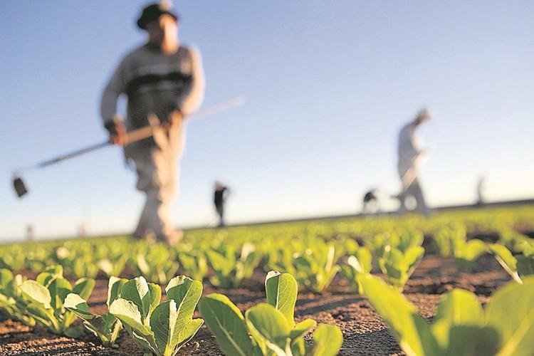 Çiftçiye Verilen Destek Dolar Karşısında Hiç Oluyor