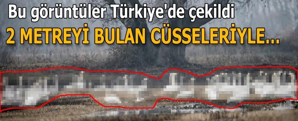 Bu görüntüler Türkiye'de çekildi
