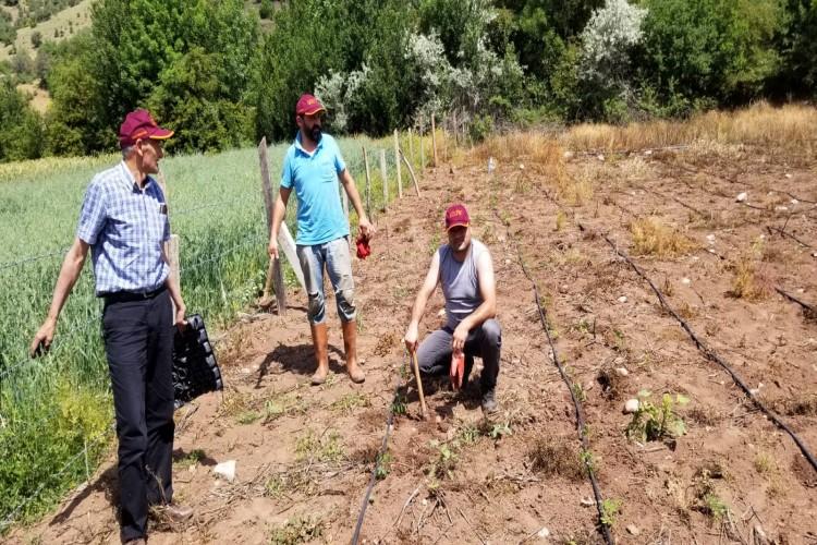 Mucize Bitki Moringa'nın Adaptasyon Bahçeleri  Tesis Edildi