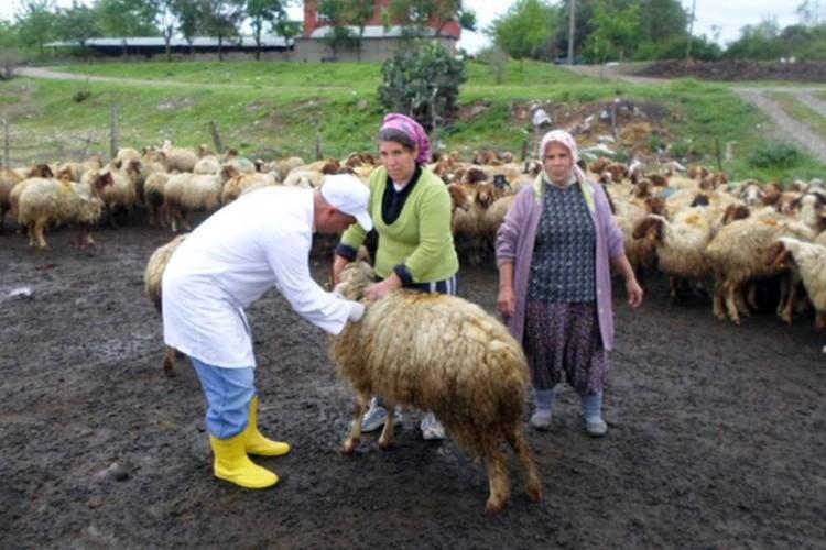 Osmaniye'de Hayvanlara Aşılama Çalışmaları Devam Ediyor