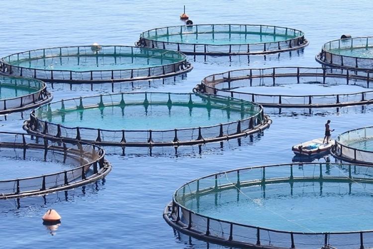 Samsun'da Su Ürünleri Yetiştiricilerine 3,5 Milyon TL Destek Ödendi