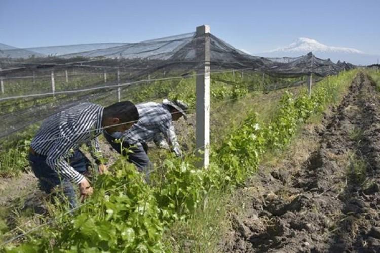 FAO, Sürdürülebilir Arazi Kullanımına Çağrıda Bulundu