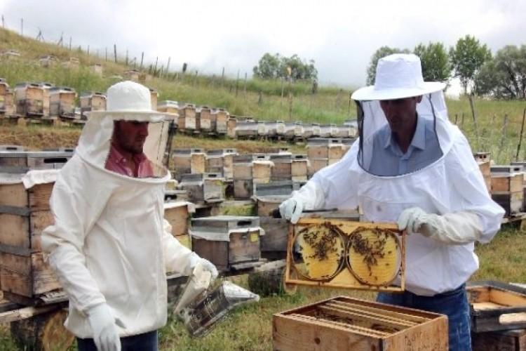 Yalova'da Organik Arıcılar Kontrol Edildi