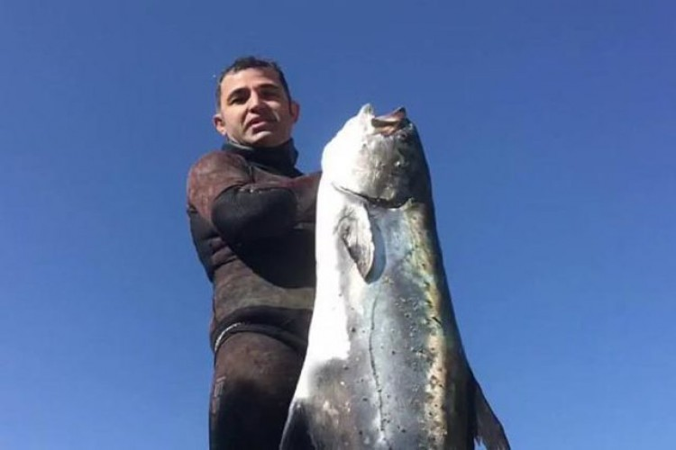 Zıpkınla 40 Kiloluk Liça Balığı Avladı
