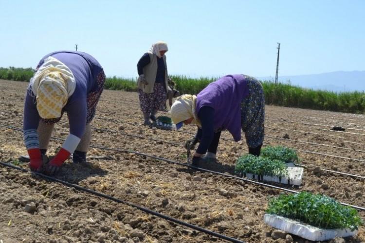 Salihli'de İşçi Ve Biçerdöver Fiyatları Belirlendi